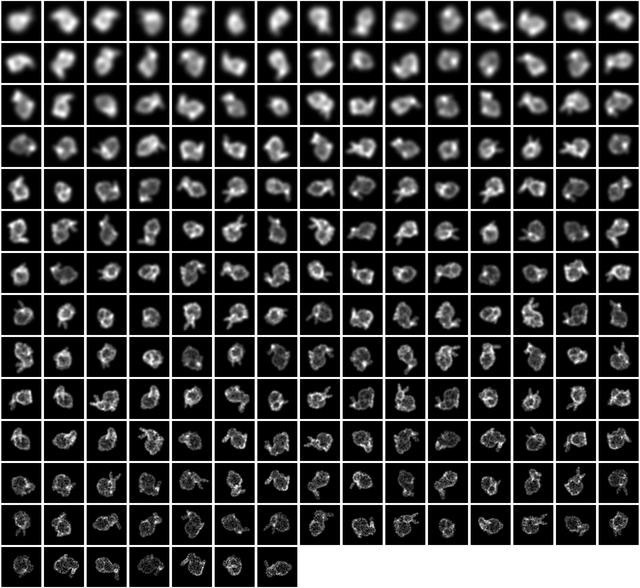 Montage of Input Images.