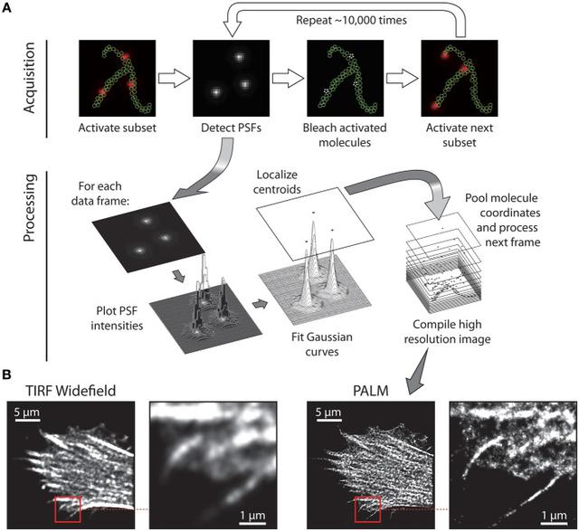 Overview of SMLM.